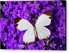 White Butterfly On Campanula Acrylic Print