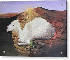 White Camel  Acrylic Print