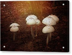 Acrylic Print featuring the photograph White Cap Mushrooms by Carolyn Dalessandro