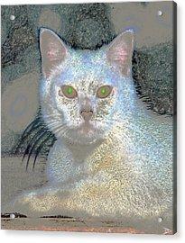 White Cat Green Eyes Acrylic Print