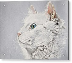 White Cat Acrylic Print