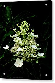 White Chandelier Acrylic Print by Michael Taggart II