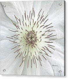 White Clematis Flower Macro 50121c Acrylic Print