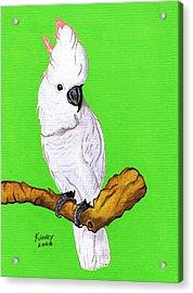 White Cockatoo Acrylic Print by Jay Kinney