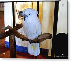 Acrylic Print featuring the photograph White Cockatoo by Suhas Tavkar