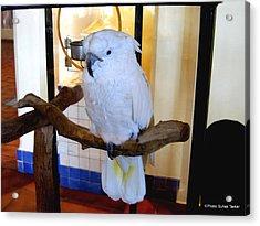 White Cockatoo Acrylic Print by Suhas Tavkar