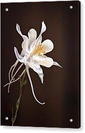 White Columbine Acrylic Print by James Steele