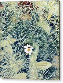 White Cosmo Acrylic Print