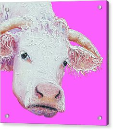 White Cow On Pink Background Acrylic Print by Jan Matson