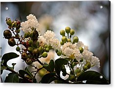 Acrylic Print featuring the photograph White Crape Myrtle- Fine Art by KayeCee Spain