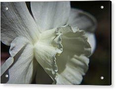 White Daffodil Acrylic Print by Teresa Mucha
