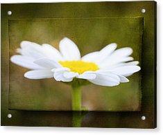 White Daisy Acrylic Print by Eduard Moldoveanu