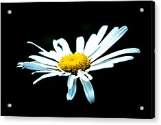Acrylic Print featuring the photograph White Daisy Flower Black Background by Alexander Senin