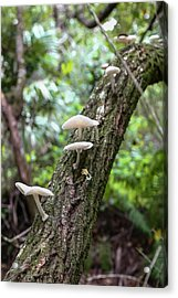 White Deer Mushrooms Acrylic Print