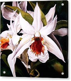 White Dendrobium Orchid Acrylic Print