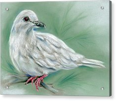 White Dove In The Pine Acrylic Print