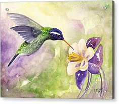 White-eared Hummingbird Acrylic Print by Art by Carol May
