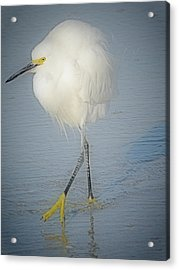 White Egret At Sunrise Acrylic Print by Rose  Hill