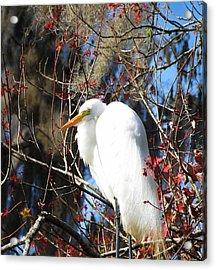 White Egret Bird Acrylic Print
