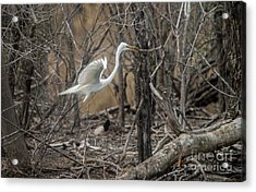 Acrylic Print featuring the photograph White Egret by David Bearden