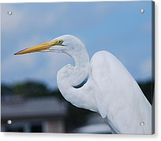 Acrylic Print featuring the photograph White Egret by Margaret Palmer