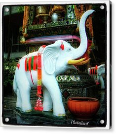 Acrylic Print featuring the photograph White Elephant. Meaning A Big Expensive by Mr Photojimsf