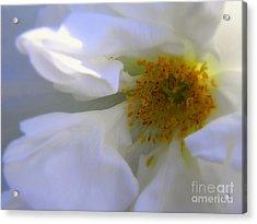 White Acrylic Print by Elfriede Fulda