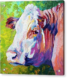 White Face Cow Acrylic Print