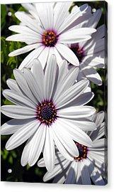 White Flower 1 Acrylic Print