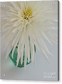 White Flower In A Vase By Jasna Gopic Acrylic Print by Jasna Gopic