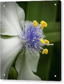 Acrylic Print featuring the photograph White Flower by Jean Noren