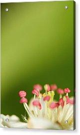 White Flower Acrylic Print by Jouko Mikkola