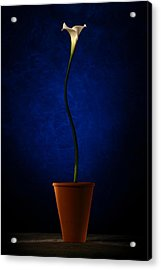Acrylic Print featuring the photograph White Flower by Riana Van Staden