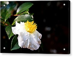 White Flower-so Silky And White Acrylic Print