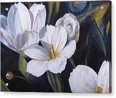 White Flower Study Acrylic Print by Victoria Heryet