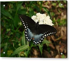 White Flowered Butterfly Acrylic Print