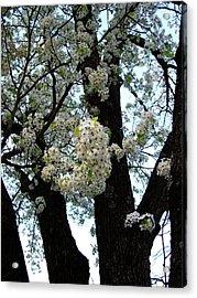 White Flowers - 44 Acrylic Print by Donovan Hubbard
