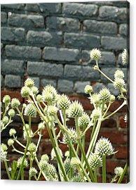 White Flowers And Bricks Acrylic Print
