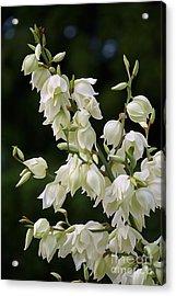 White Flowers Photography Acrylic Print