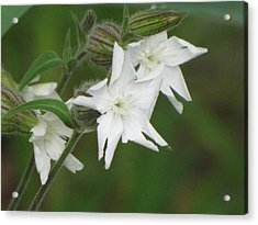 White Flowers Acrylic Print by Sylvia Wanty