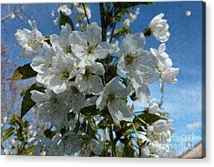 White Flowers - Variation 2 Acrylic Print