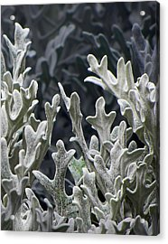 White Forest 2 Acrylic Print by Michael Taggart II