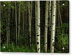 Acrylic Print featuring the photograph White Forest by James BO Insogna