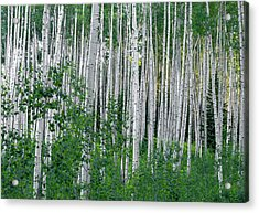 Acrylic Print featuring the photograph White Forest by Tim Reaves