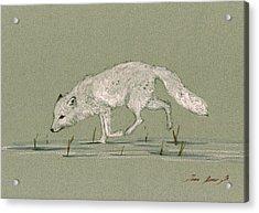 White Fox Walking Acrylic Print by Juan  Bosco