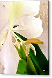 White Ginger Close Up Abstract Acrylic Print