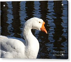 White Goose Acrylic Print by Elizabeth Fontaine-Barr