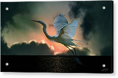 White Heron At Sundown Acrylic Print