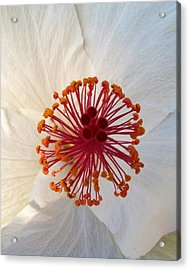 White Hibiscus - Edit Acrylic Print by Alohi Fujimoto
