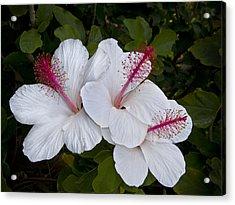 White Hibiscus Trio Acrylic Print